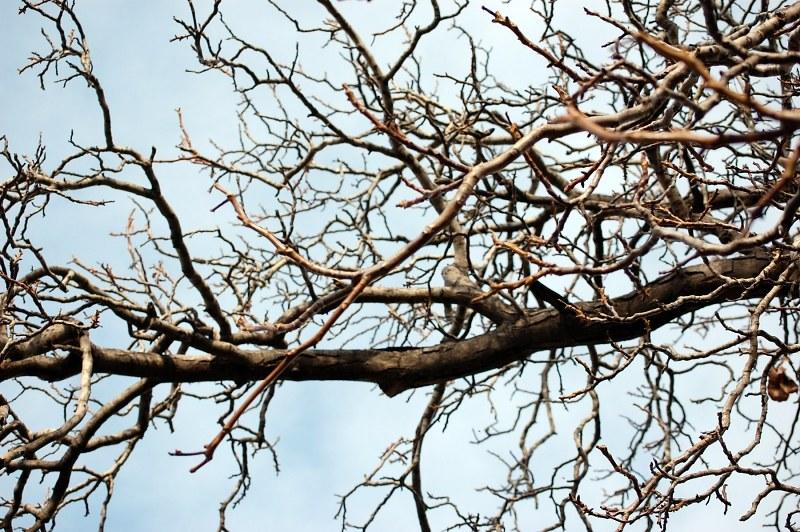 Ramas de árboles - Imagen libre de 4 Free Fotos