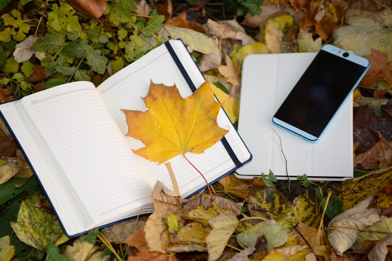 Autumn school concept in park with mobile phone and agenda
