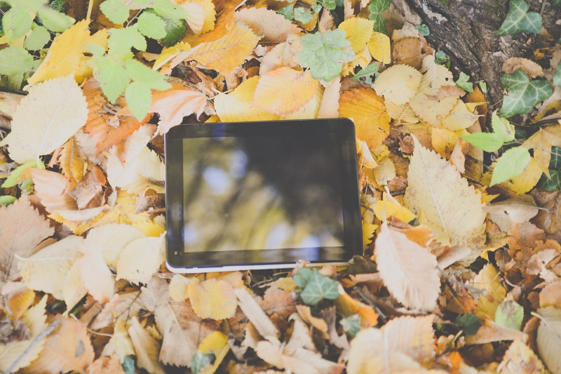 Autumn tablet leaves