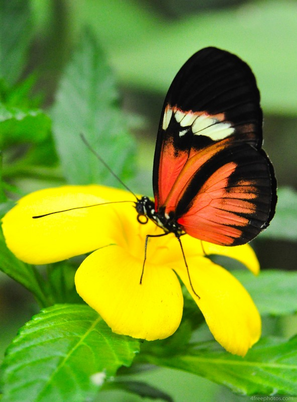 Butterfly on yellow flower