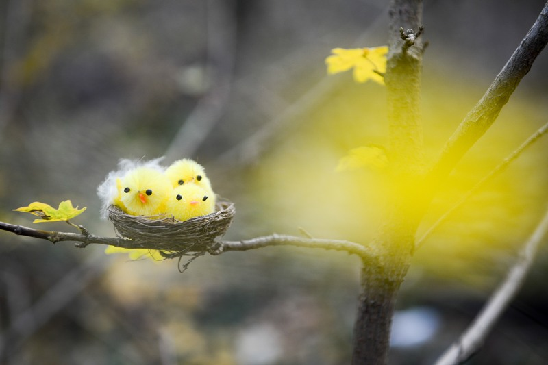 Cute yougn birds forest nest
