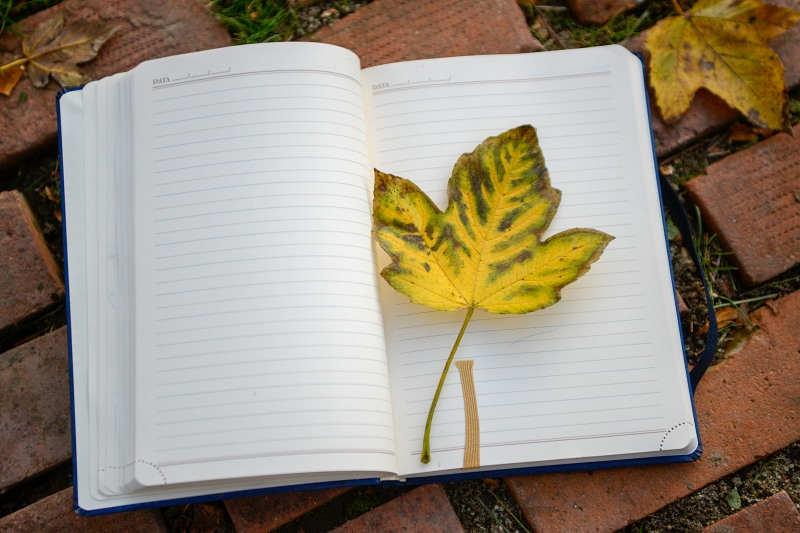 Maple leaf on notebook page
