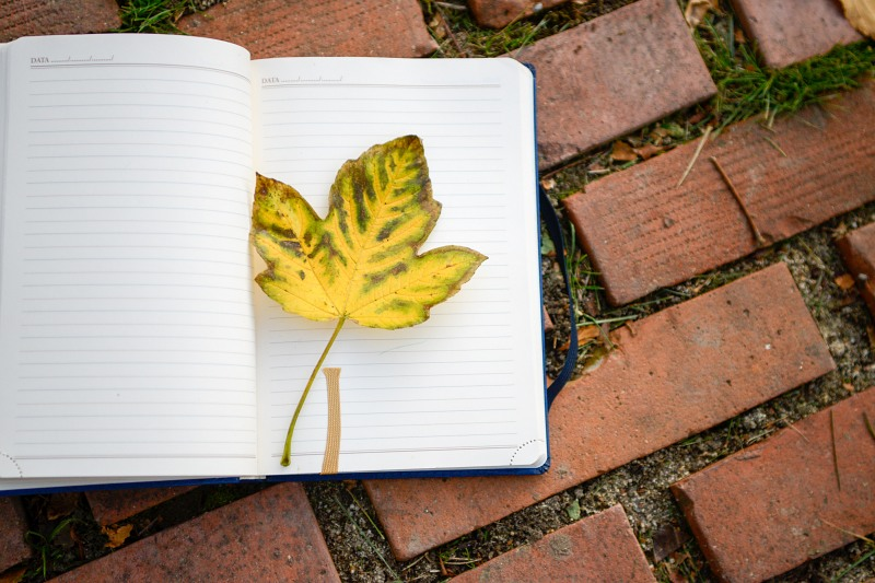 Open notebook page yellow leaf