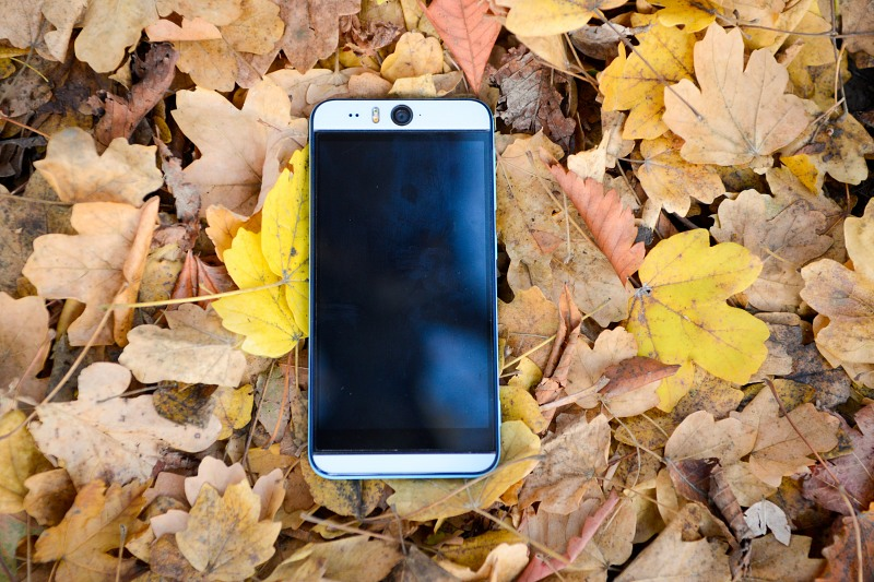 Phone on autumn leaves background