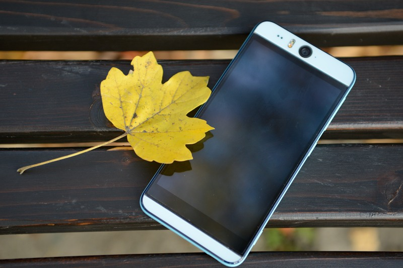 Smartphone and autumn leaf