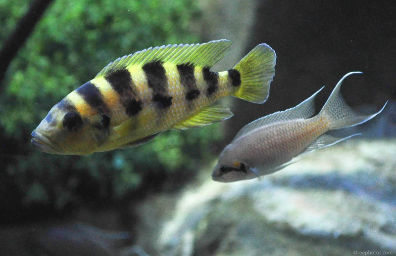 Two baby reef fish
