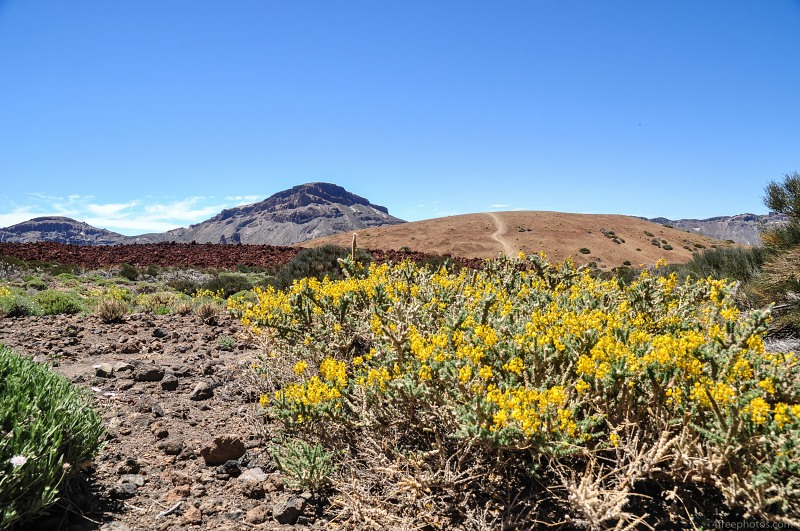Yellow desert flowers