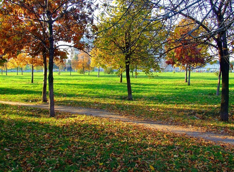 Autumn in park in morning