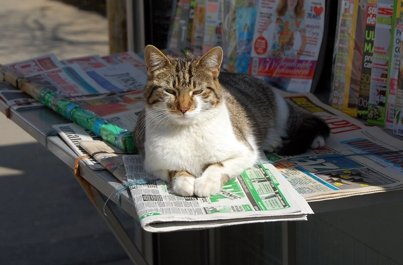 Cat on a newspaper stand