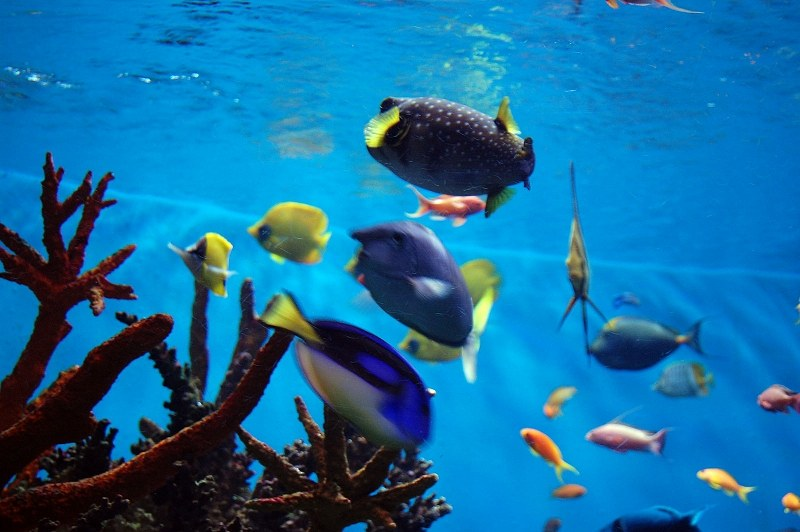 colored fish swimming in water tank 4 free photos highres