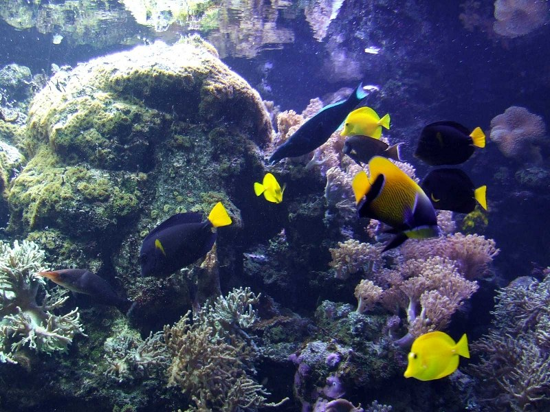 Tropical reef fish allfreekidscraftscom party for Reef tropical fish