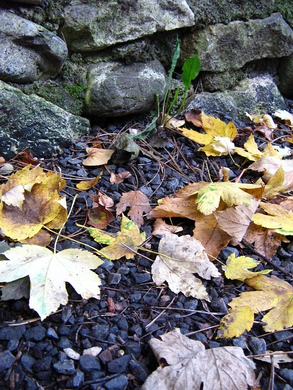Dead leafs on ground