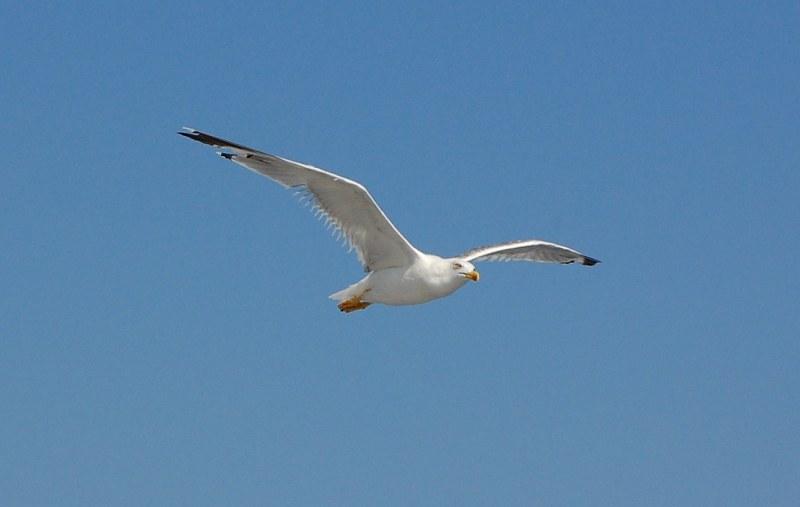 Bird flying - 4 Free P...