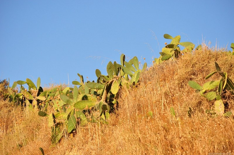 Plantas e céu do cacto