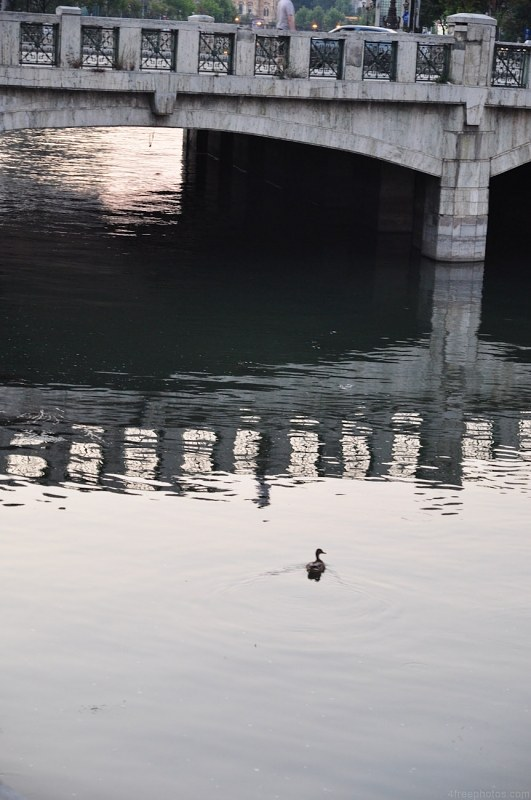Duck under a bridge