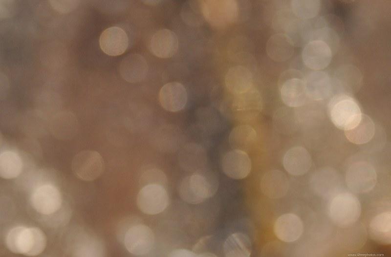 sparkle brown wallpaper - photo #38