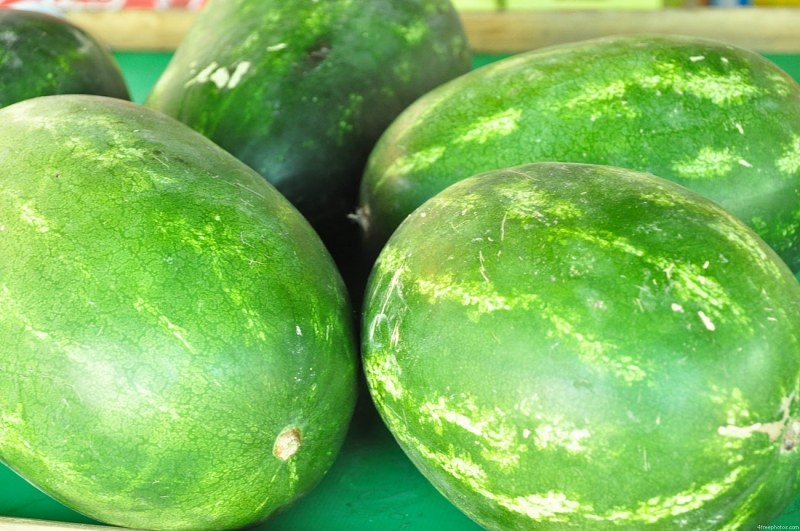 Green summer melons