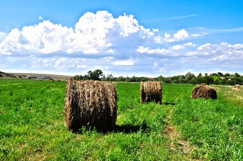 Hay rolls on farmland