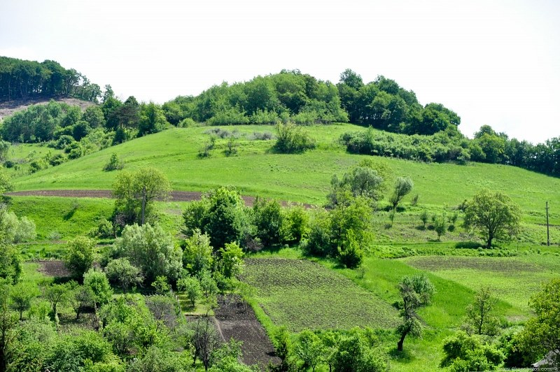 Hill with trees and crop fields