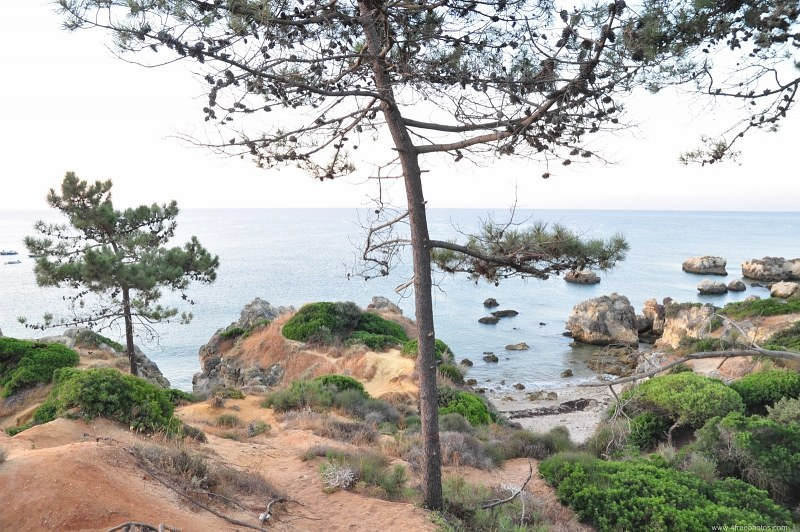 Pine trees and rock