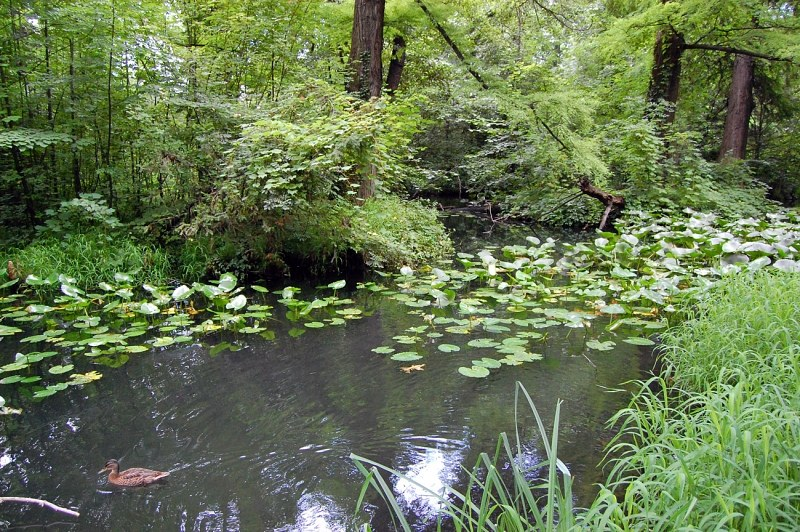 Pond In Forest 4 Free Photos Highres
