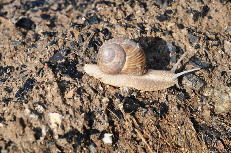Snails on ground