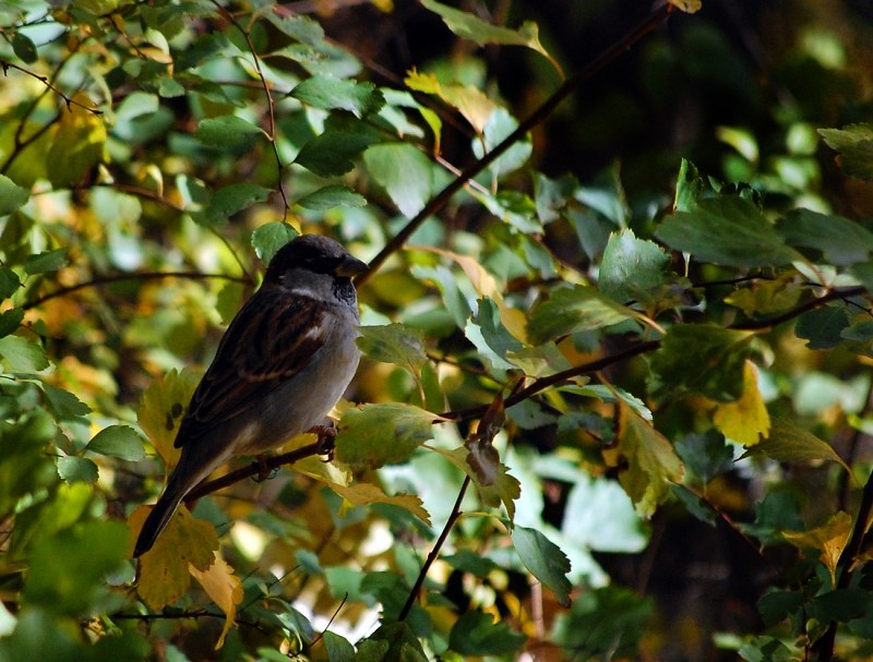 Sparrow in forest
