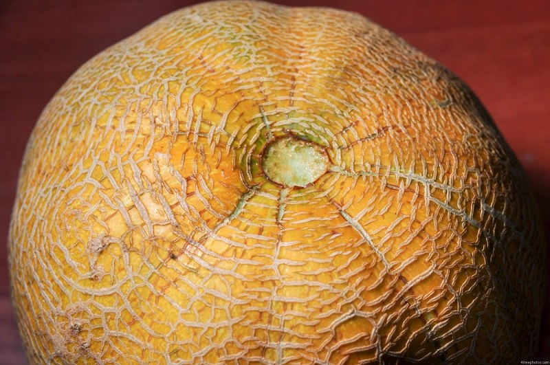 Yellow cantaloupe mellon