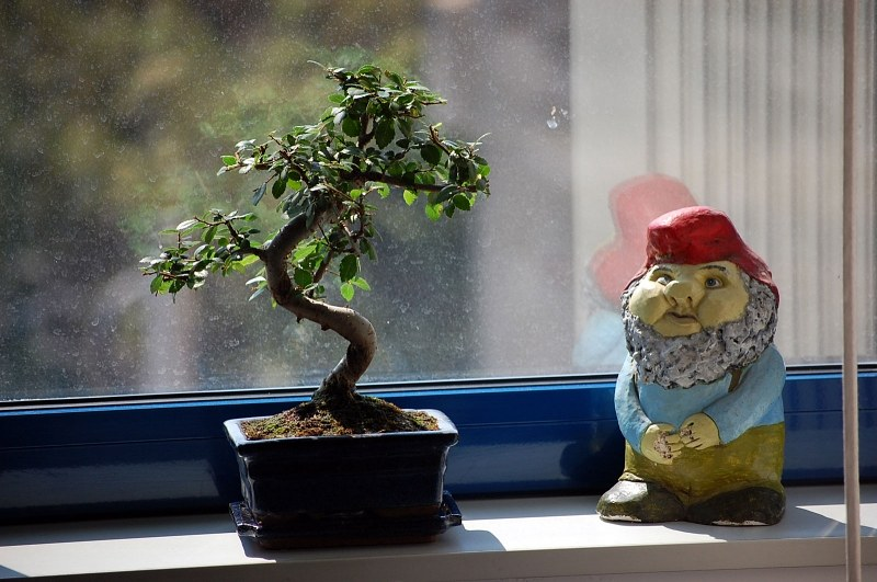 Bonsai and midget