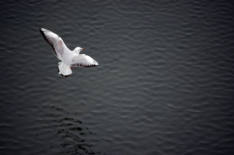 Bird flying over sea