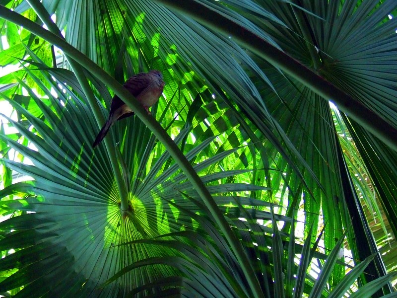 Exotic plant leaves in jungle alegri free photos highres for Plante jungle