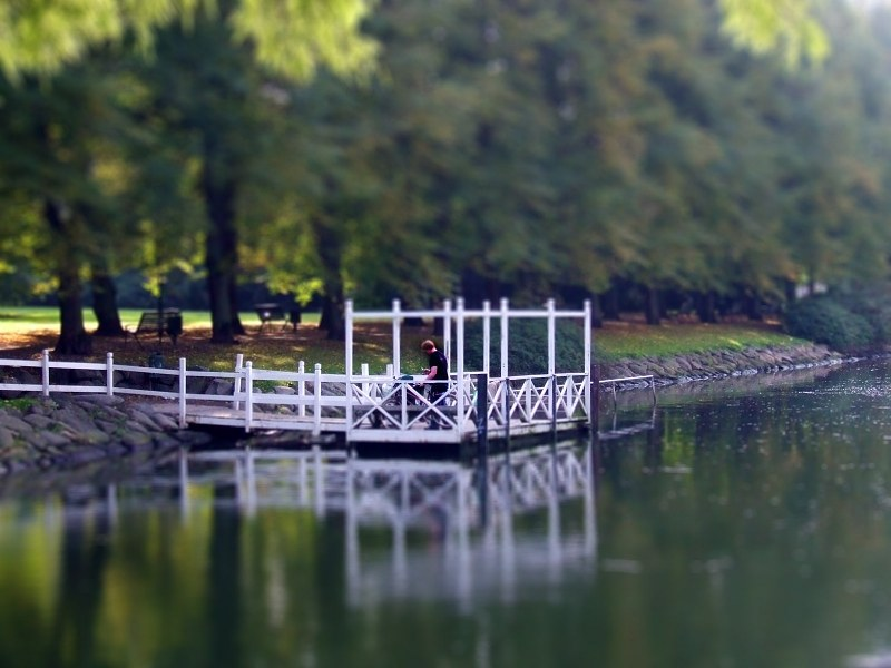 Pontoon on lake in forest