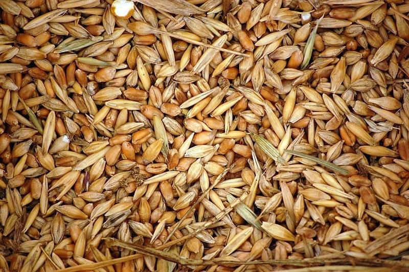 Bulk buyers, wheat
