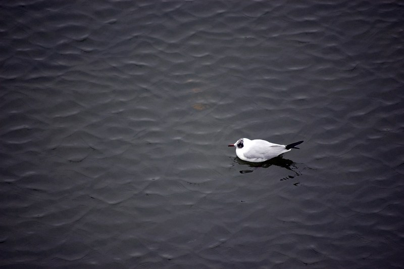 White bird on lake