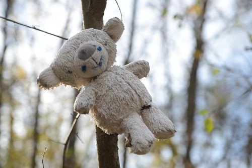 Abandoned teddy bear toy in a tree