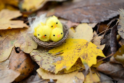 Autumn  yellow fluffy birds nesting