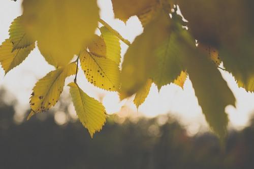 Autumn branch sunset