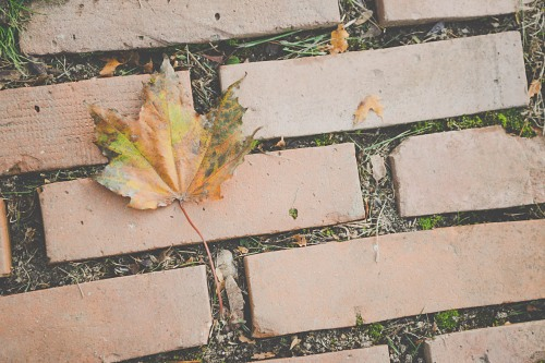 Autumn leaf on brick tiles