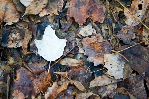 Autumn leaf on dry leaves backgroud