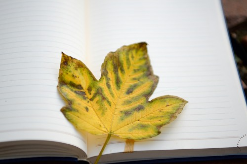 Autumn leaf on notepad pages