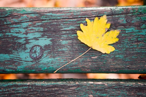Autumn leaf on old wood bench