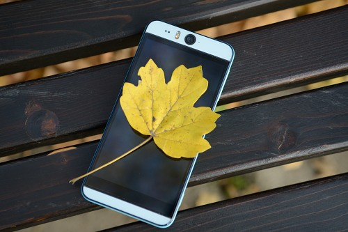 Autumn leaf on smartphone screen
