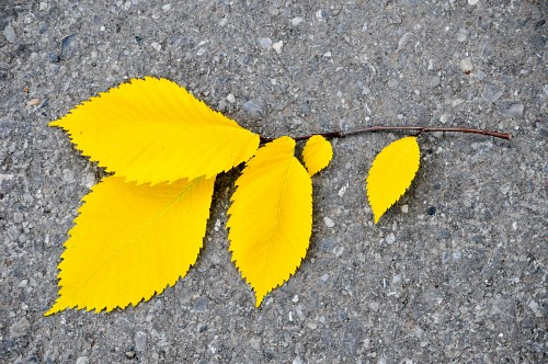Autumn leafs concrete