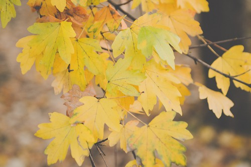 Autumn leaves branch tree background