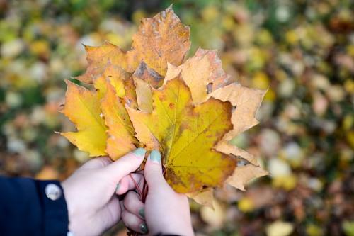 Autumn maple leafs bouquet