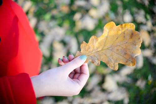 Autumn oak leaf hand