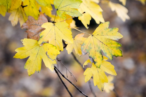Branch with yellow autumn leaves in forest