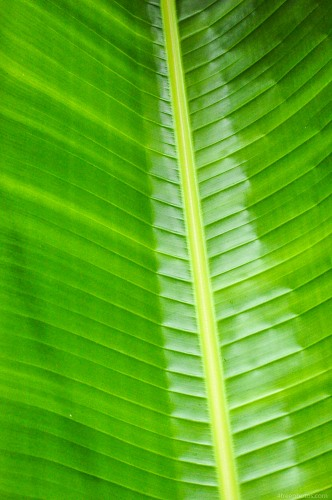 Bright tropical green leaf