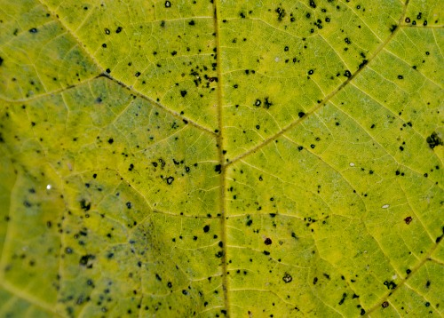 Bright yellow leaf surface closeup