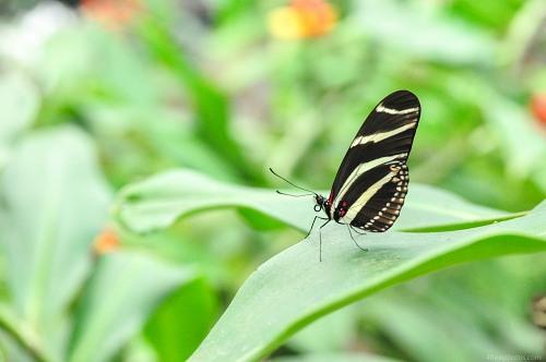 Butterfly on leaf macro